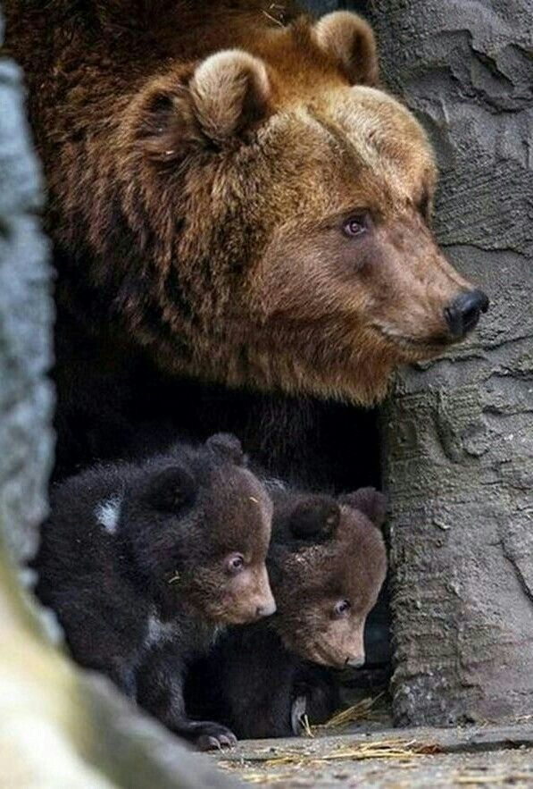 Mother And Her Two Cubs Animales Salvajes Animales Adorables