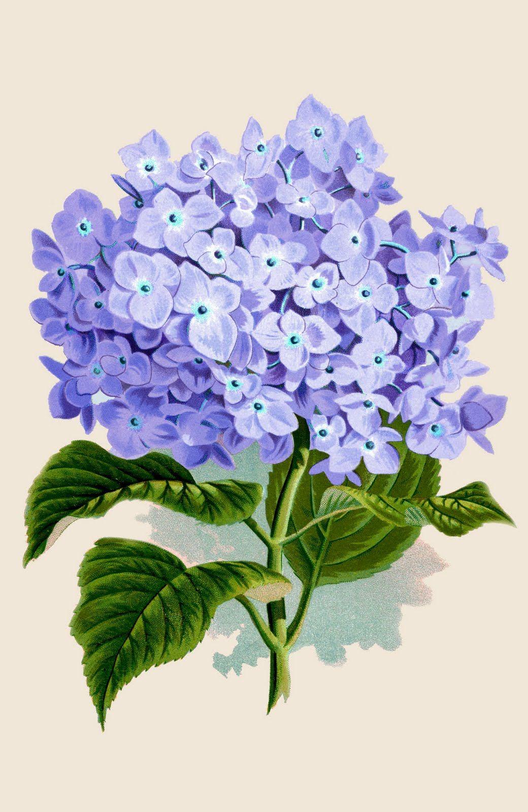 Vintage Printable Instant Art Amazing Purple Hydrangea Flowers