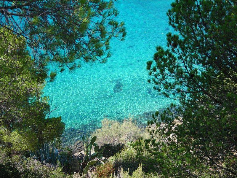 la spiaggia di fetovaia all'isola d'elba (con immagini