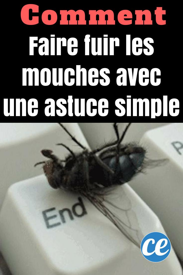 Faire Fuir Les Fourmis comment je fais fuir les mouches avec une astuce toute