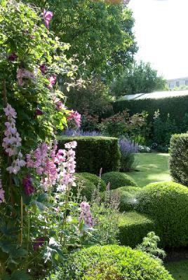 Classic, romantic garden, Delphinium - larkspur, pink, Buxus sempervirens - boxwood hedge topiary.