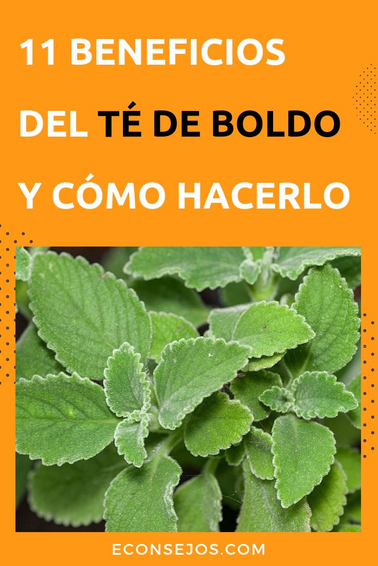 Descubre 11 Beneficios Del Té De Boldo Para La Salud Te De Boldo Beneficios Hierbas Naturales Hierbas Curativas