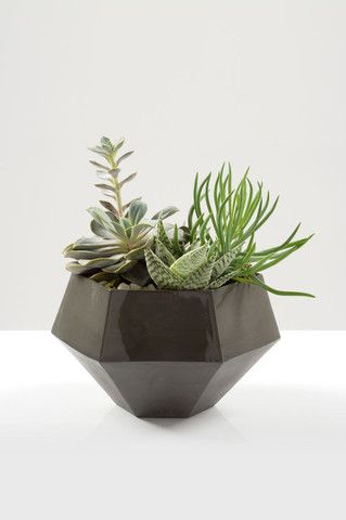 Graphyne Ceramic Planter (Grey) - Light + Ladder