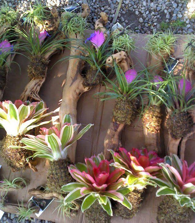 Tropical Backyard Ideas Australia: Bromeliads On Branches For Garden Walls