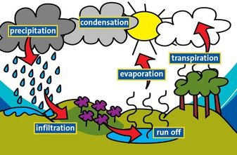 Science water cycle tet success key study material science science water cycle tet success key ccuart Image collections