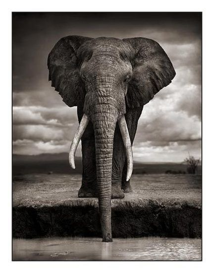 Photo by Nick Brandt who is famous for his images of East African wildlife. He has produced a large collection of work which represents a powerful expression of the beauty and grandeur of the animal kingdom in this part of the world.