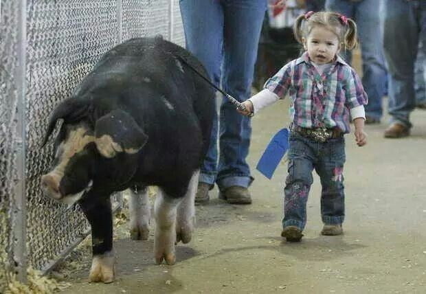 This will be my daughter with a dad who's a show pig farmer