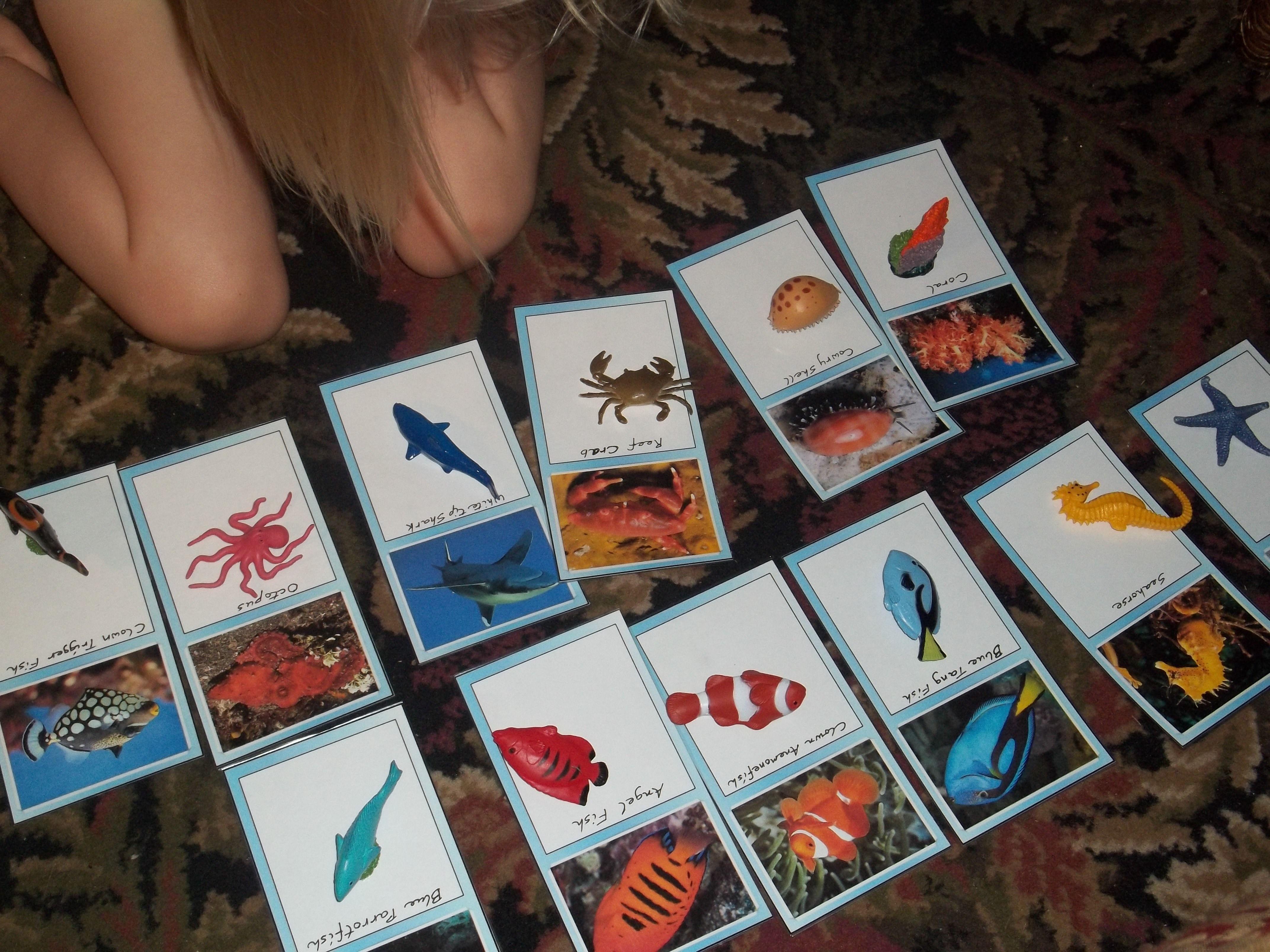 Diy Montessori Coral Reef Matching Cards