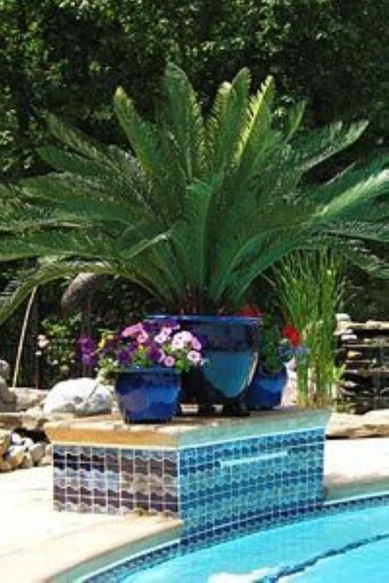 Beautiful Plants Grow Beside Swimming Pool Ideas Plants Around Pool Pool Plants Pool Planters