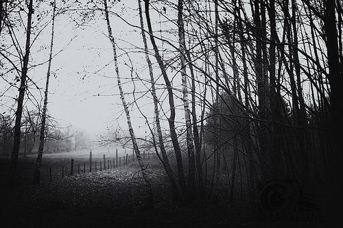 Landscape / Fog