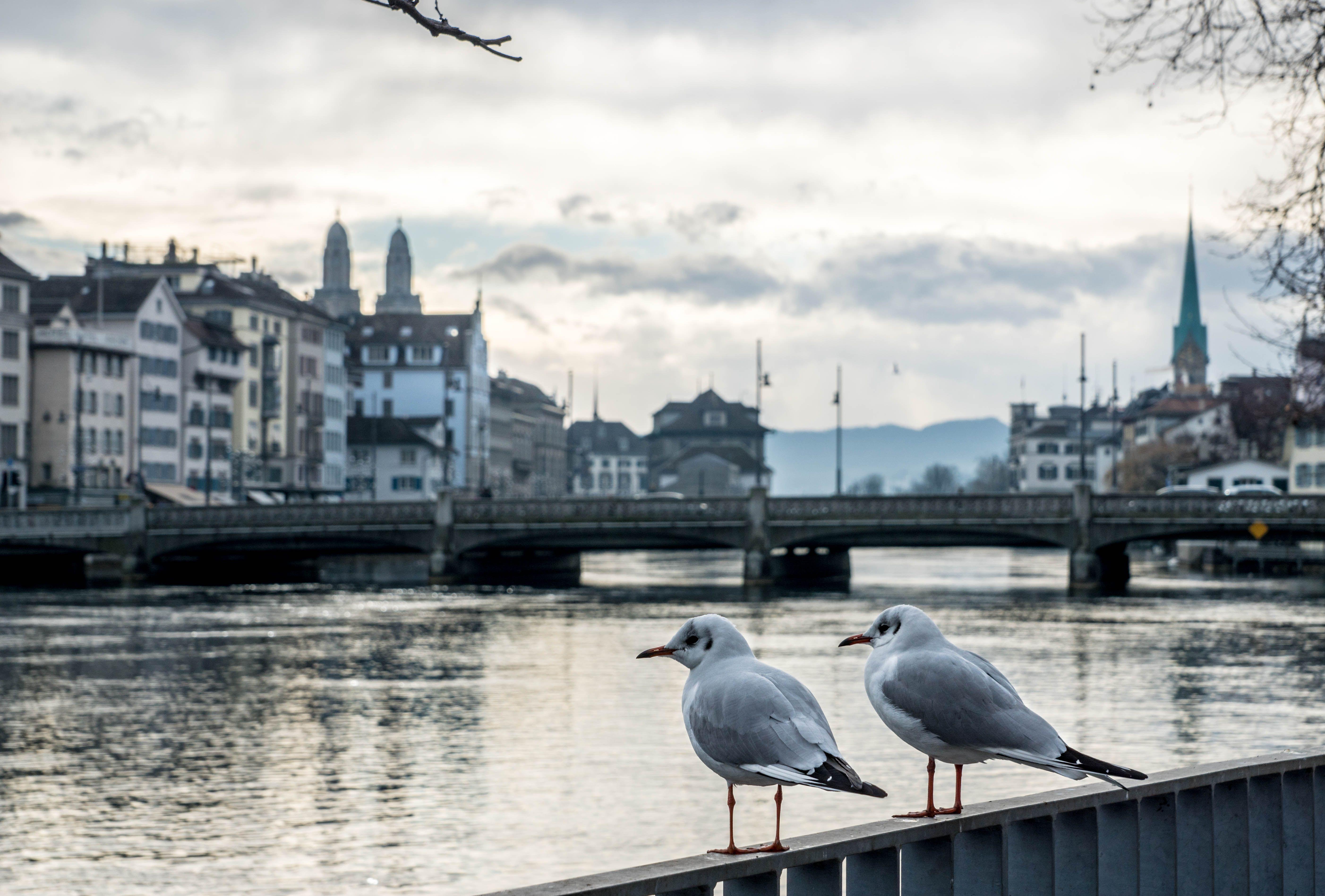 Zurich Stadt City See Brucke Haus Mieten Wohnen Kaufen Leben Geniessen Einrichten Suchen Zurich Stadt Zurich Stadt