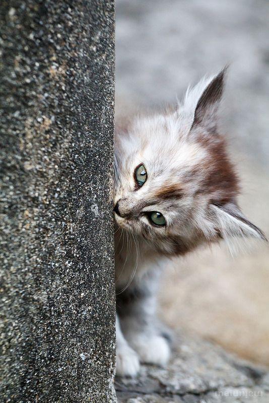 Meow Cats Cute Cats Cat Fur