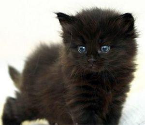 """Résultat de recherche d'images pour """"chaton marron mignon"""""""