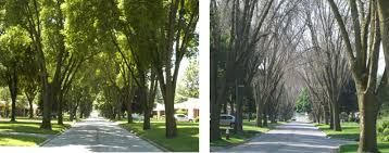 Image result for tree lined street