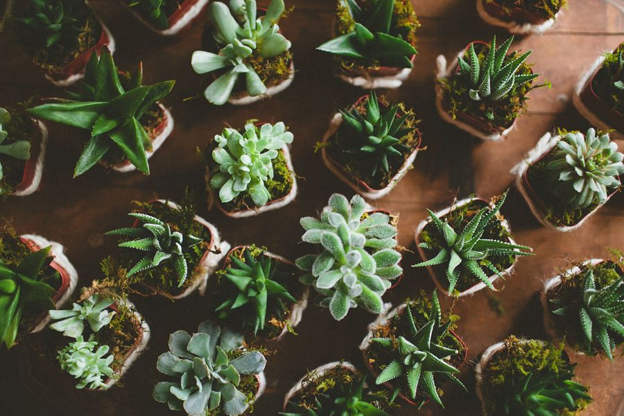 Yesss succulents! Candace Kevin // A Colorful, Earthy