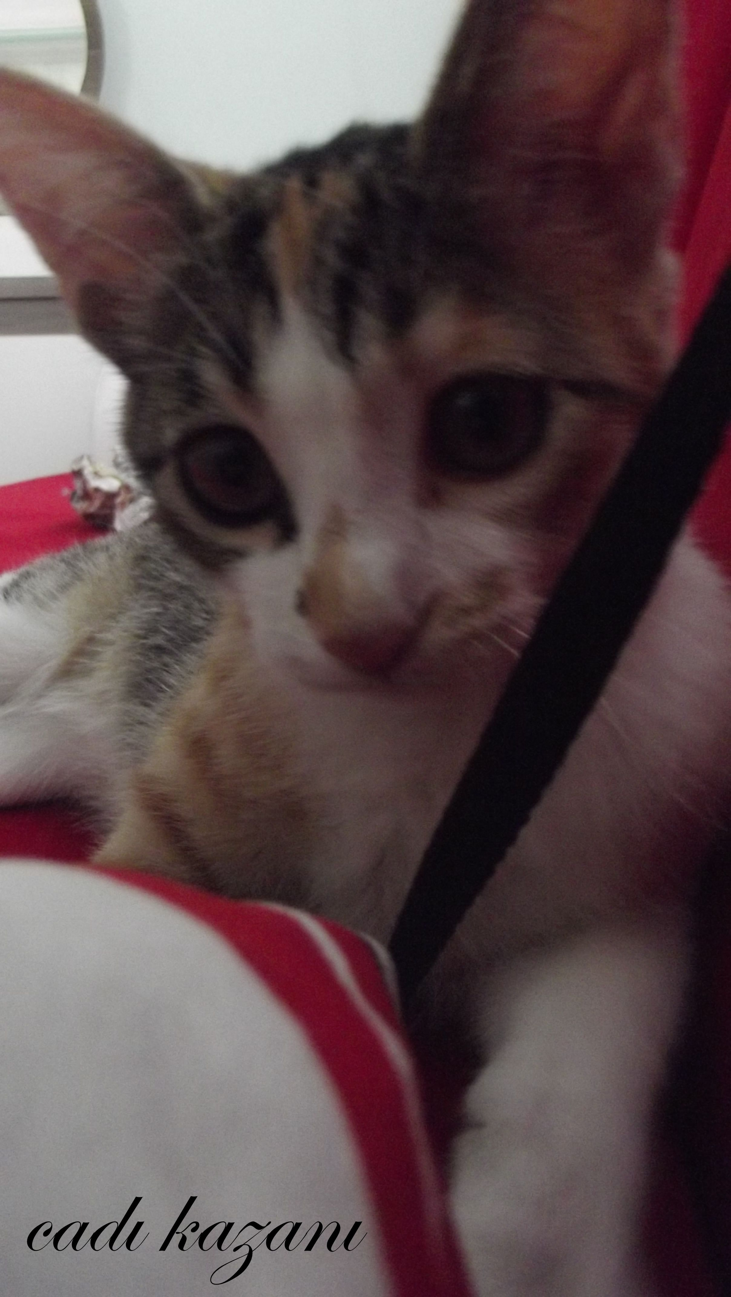 kittenlove17