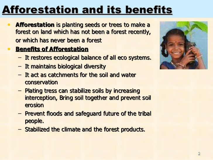 Short essay on afforestation