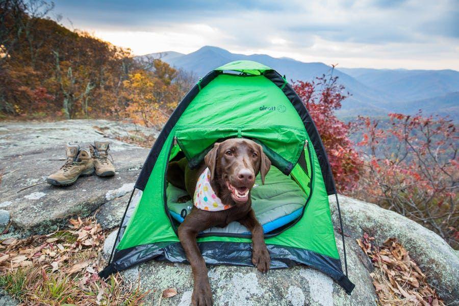 The 5 best adventure dog breeds dog adventure hiking