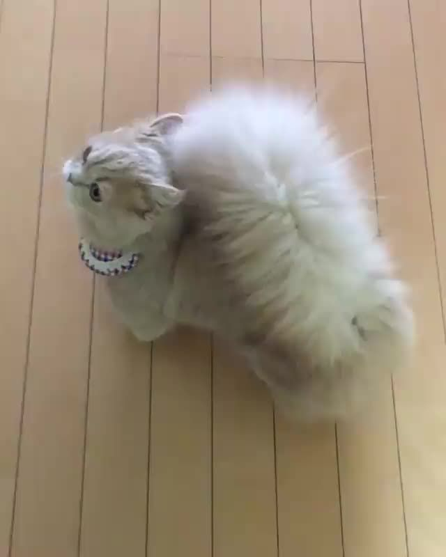 20 Munchkin Cats That Are The Sweetest Little Pota