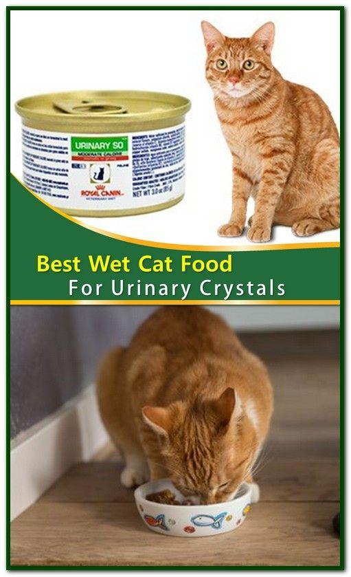 Best Wet Food For Urinary Health In Cats Di 2020 Dengan Gambar