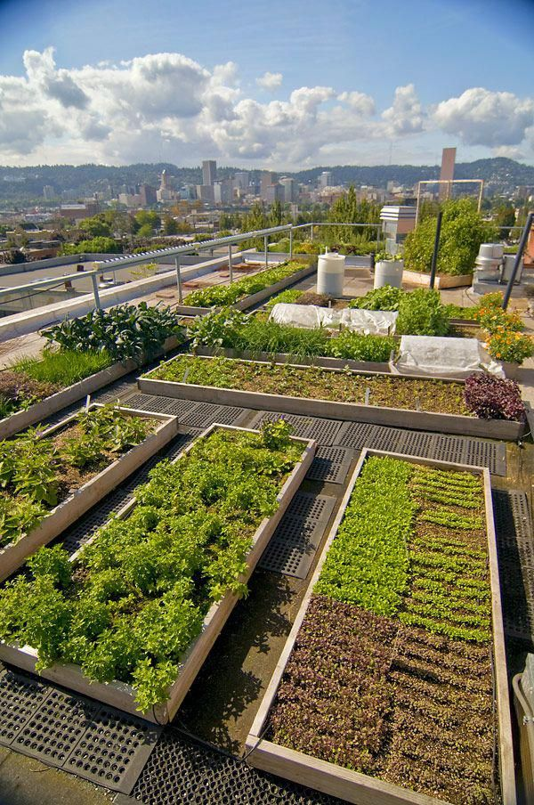 An ecofriendly rooftop is basically a roof that really is