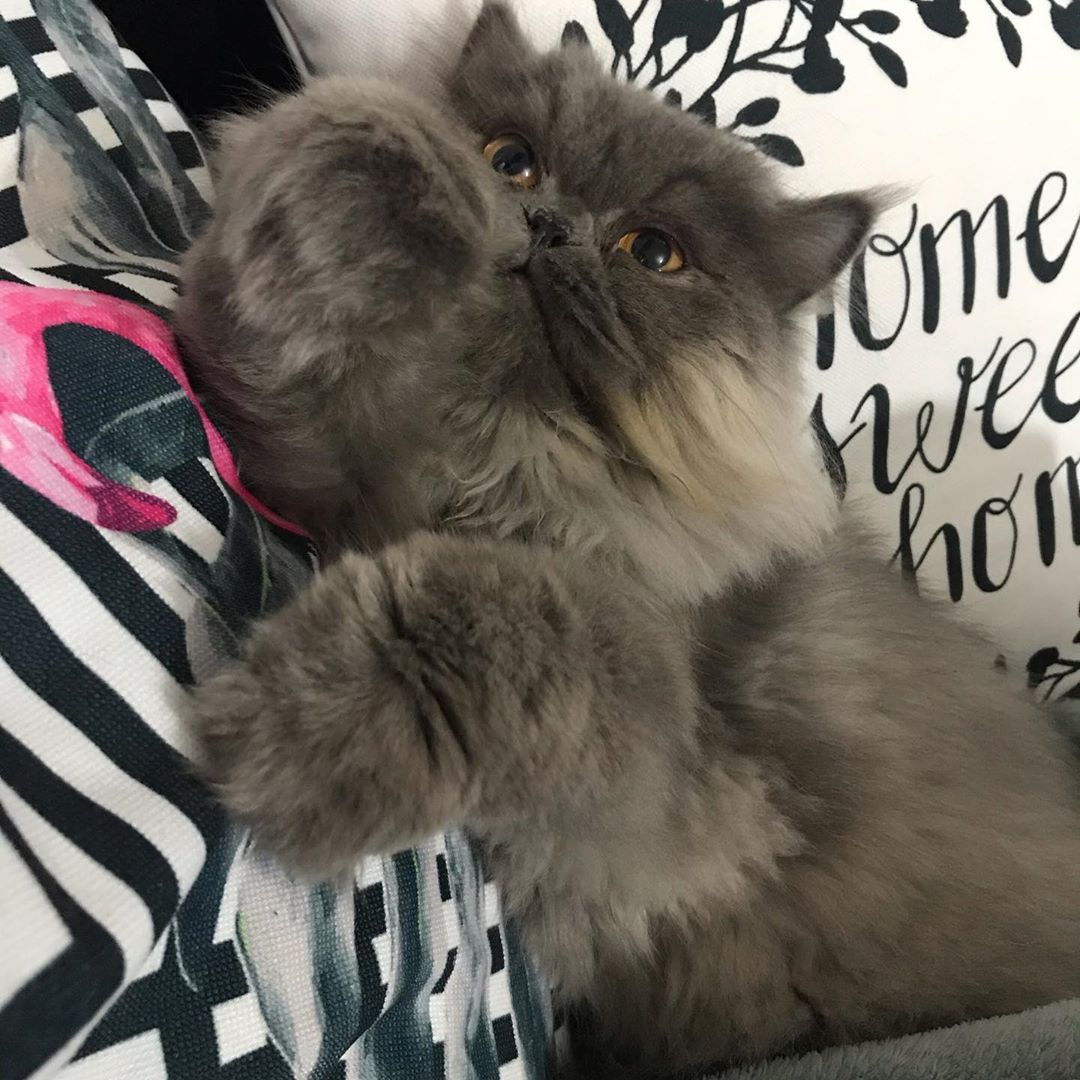 #persiancat #persiancats #persiancatlove #persiancatlovers #persiancatstagram #catpersian #cat #persiancatslovers #persiancatlife #persiancat_feature #persiancatsofig #persiancatslovers #persiancatsofinstagram #persiancatofinsta #cat #catsofinstagram #catstagram #paws #fluffy #catlover #catlife #animallover #cats_of_world #cutecat #cat_features #catsoftheworld #catlovers #catoftheday #catsagram #catslife # Instagram Bridge #persiancat #persiancats #persiancatlove #persiancatlovers #persiancatsta