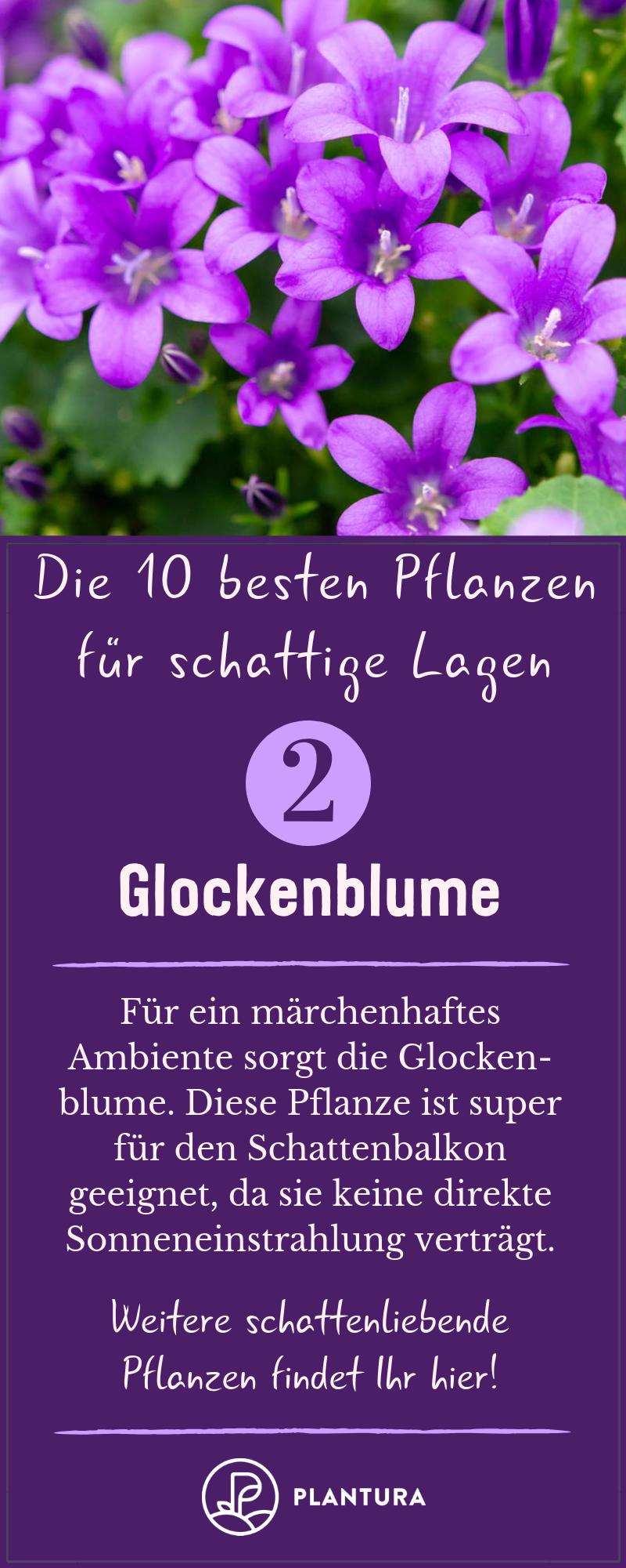 Schattenbalkon: Die 10 besten Pflanzen für schattige Lagen - Plantura