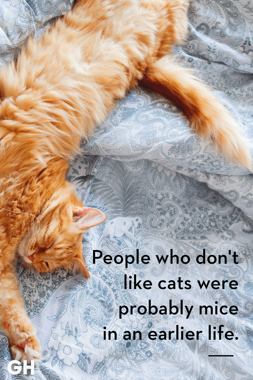 25 Quotes Only Cat Owners Will Understand Cat Quotes Kittens Funny Cat Quotes Funny