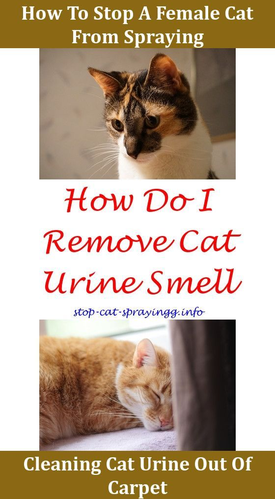 How To Train Your Cat Yes It S Possible Cat Urine
