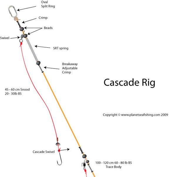 Cascade rig sea fishing pinterest rigs fish and for Pier fishing rigs beginners