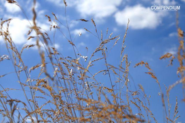 365 Tage Fotochallenge: Tag 220 - So geht Sommer