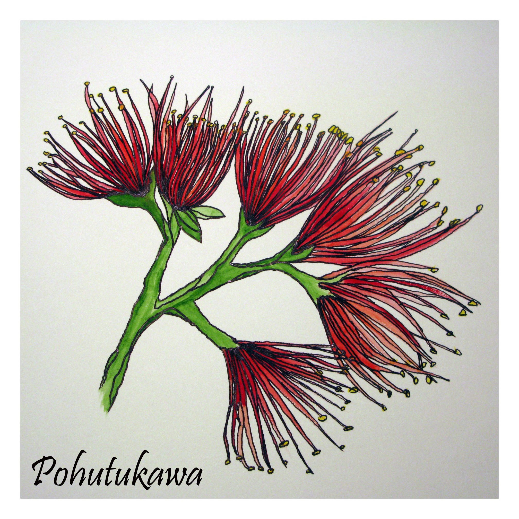 pohutukawa colouring pages (page 2) | Painting | Pinterest | Maori ...