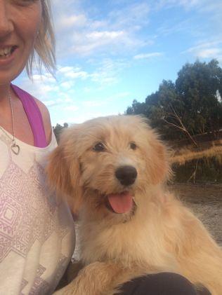 Ella Puppies Golden Retriever Park