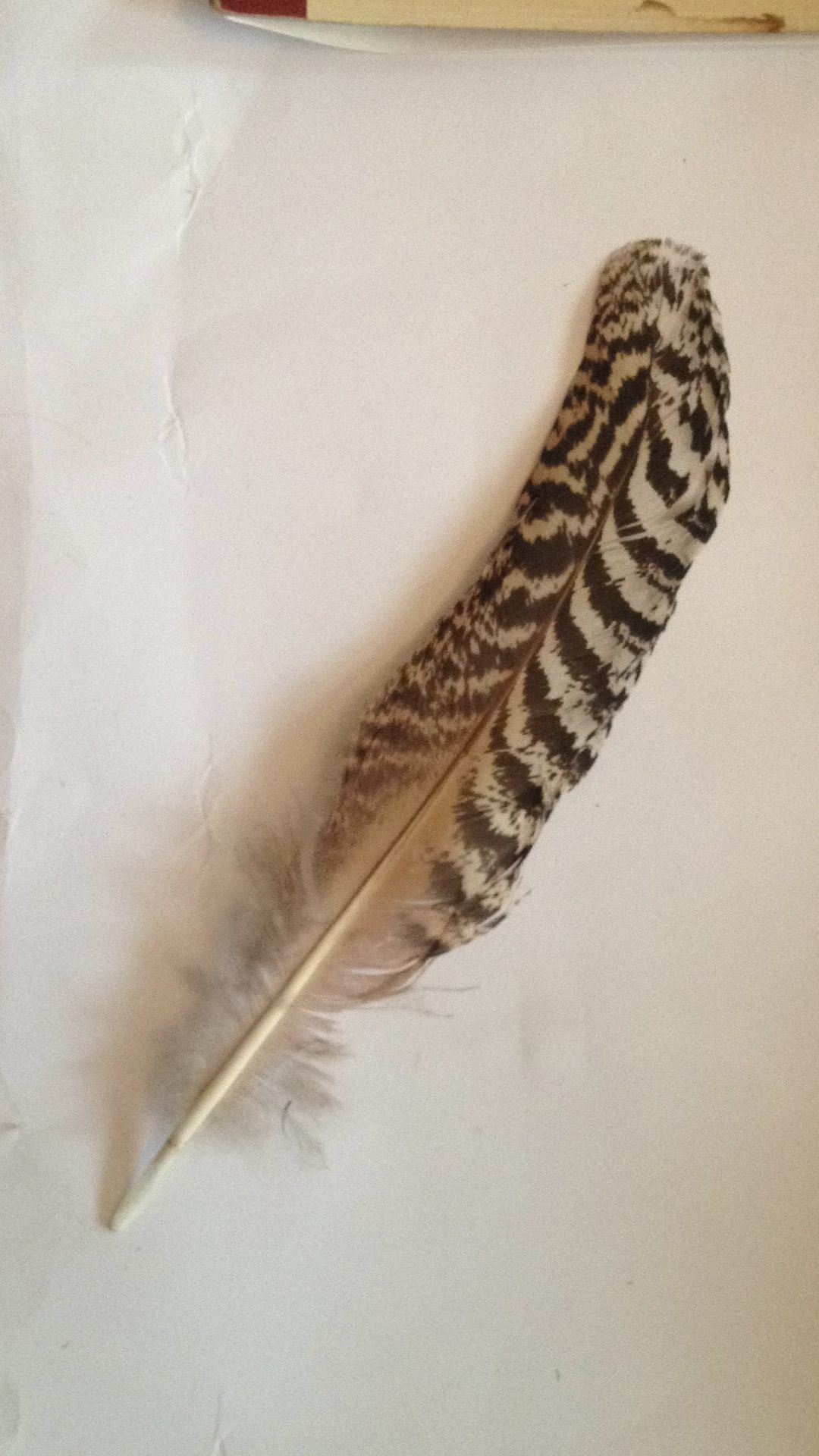 How to clean pheasant feathers - Pheasant Feather