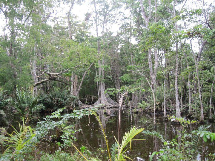 Image result for panama swamp