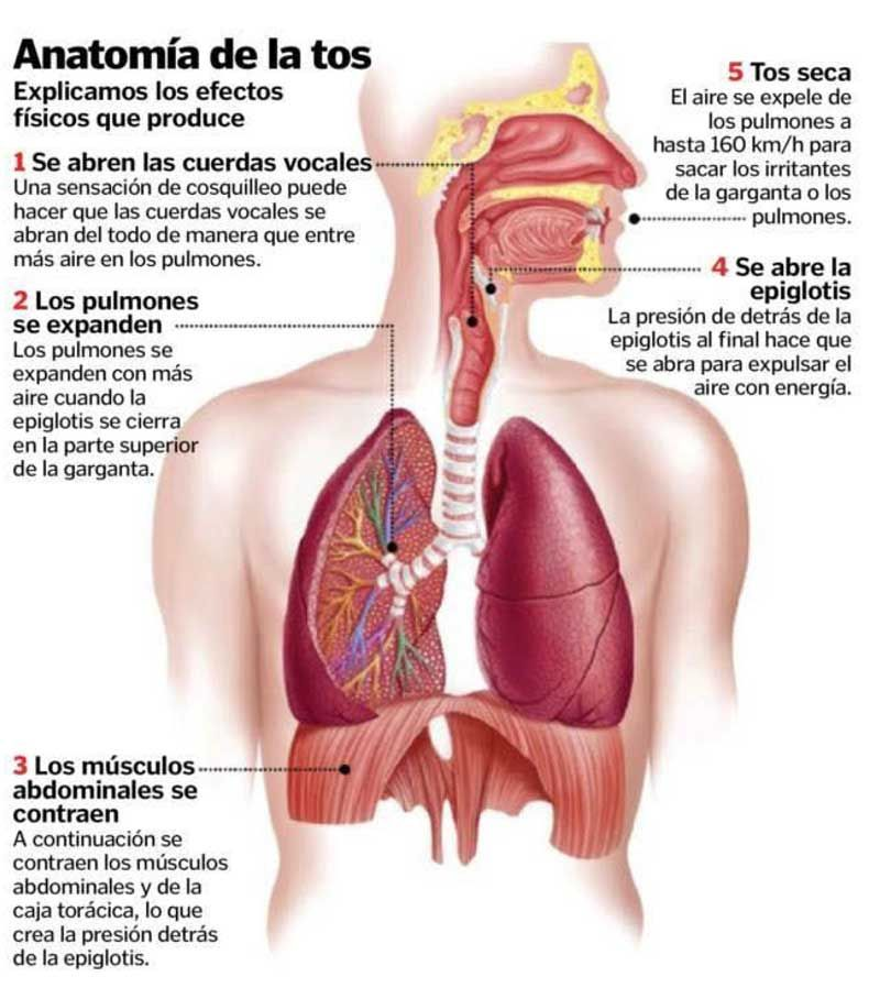 Hermosa Tabaco Anatomía Tubería Inspiración - Anatomía de Las ...