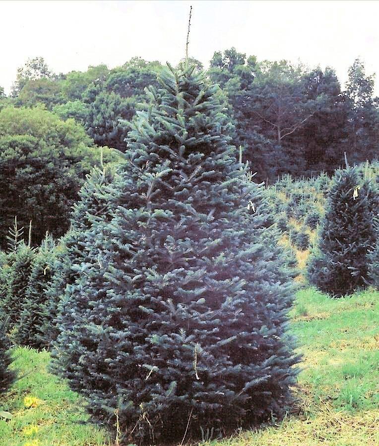 Christmas Tree Farm Before The Christmas Season North Carolina Mountains Nc Mountains Most Visited National Parks