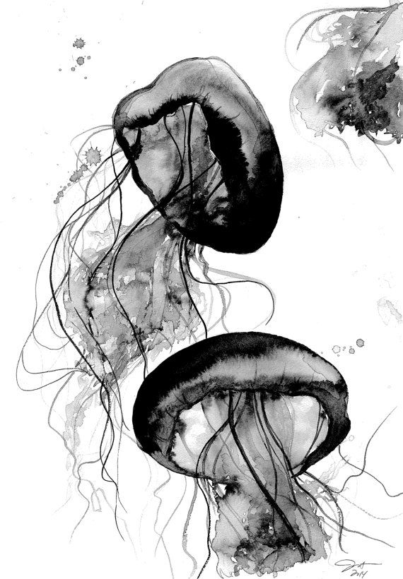 Black And White Jellyfish Watercolor Study By Jessicaillustration