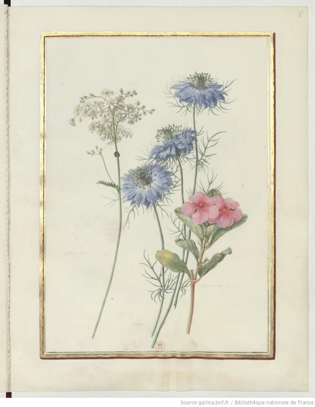 Recueil de dessins de fleurs : dessin / [Madeleine ...