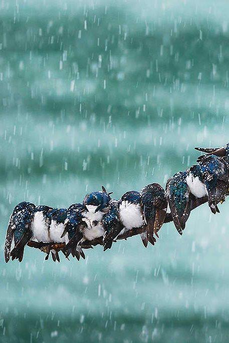 Winter Birds On A Wire - WIRE Center •