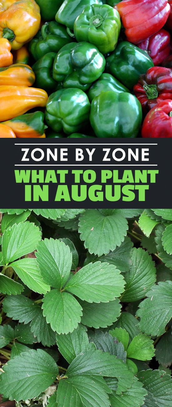 Zone by Zone: What To Plant in August