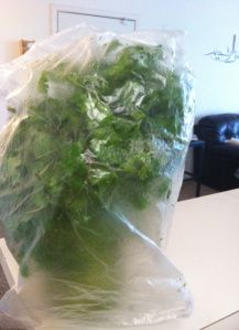 Fresh Cilantro Whenever You Need It Every Time !