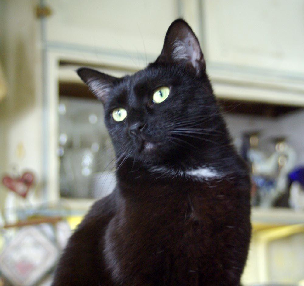 Pin On Daily Cat Photos