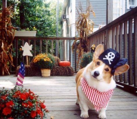 Meet Oliver A Very Cute Corgi Puppy Cute Corgi Puppy Cute