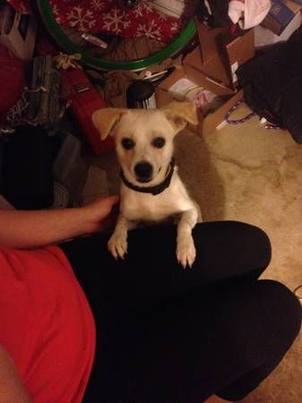 From Craigslist I found a small white terrier type dog