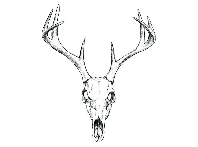 Deer Skull Illustration Google Search Tattoos Deer Skull Deer Head Skull How To Clean Deer Head For Deer Skull Tattoos Deer Skull Drawing Animal Skull Tattoos