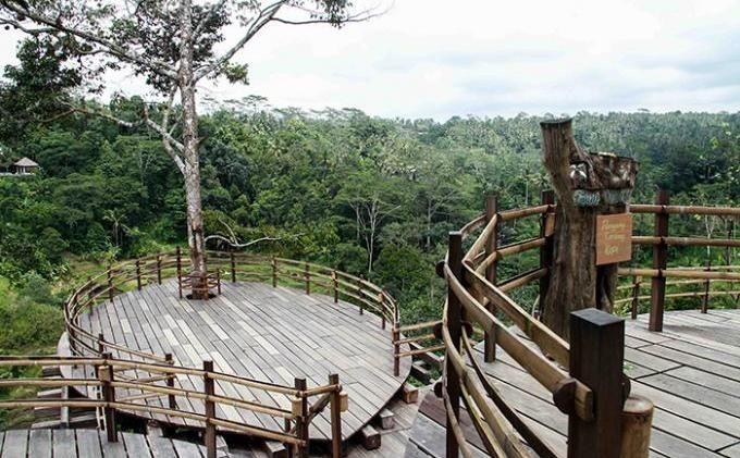 Wisata Kebun Kopi Bali Pulina Ubud Tempat Wisata Di Bali Dan Penjelasannya