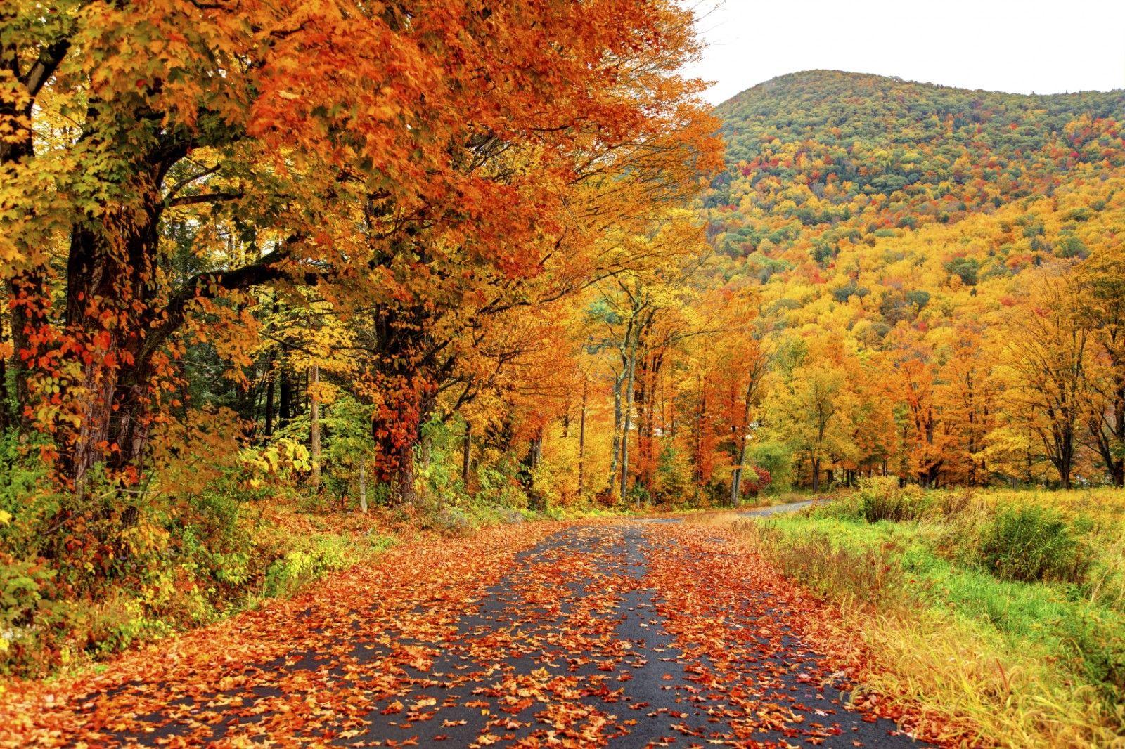 Fall Foliage in North America | Columbia Sportswear Blog | New england fall  foliage, Autumn landscape, New england fall