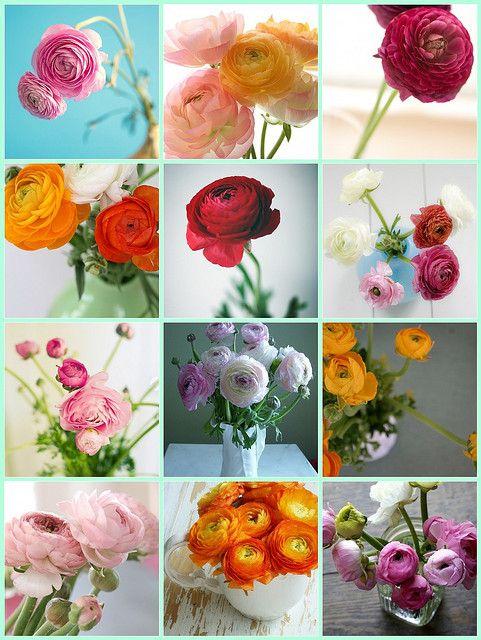 Ranunculus Ranunculus Flowers Flower Bouquet Wedding Poppy Bouquet