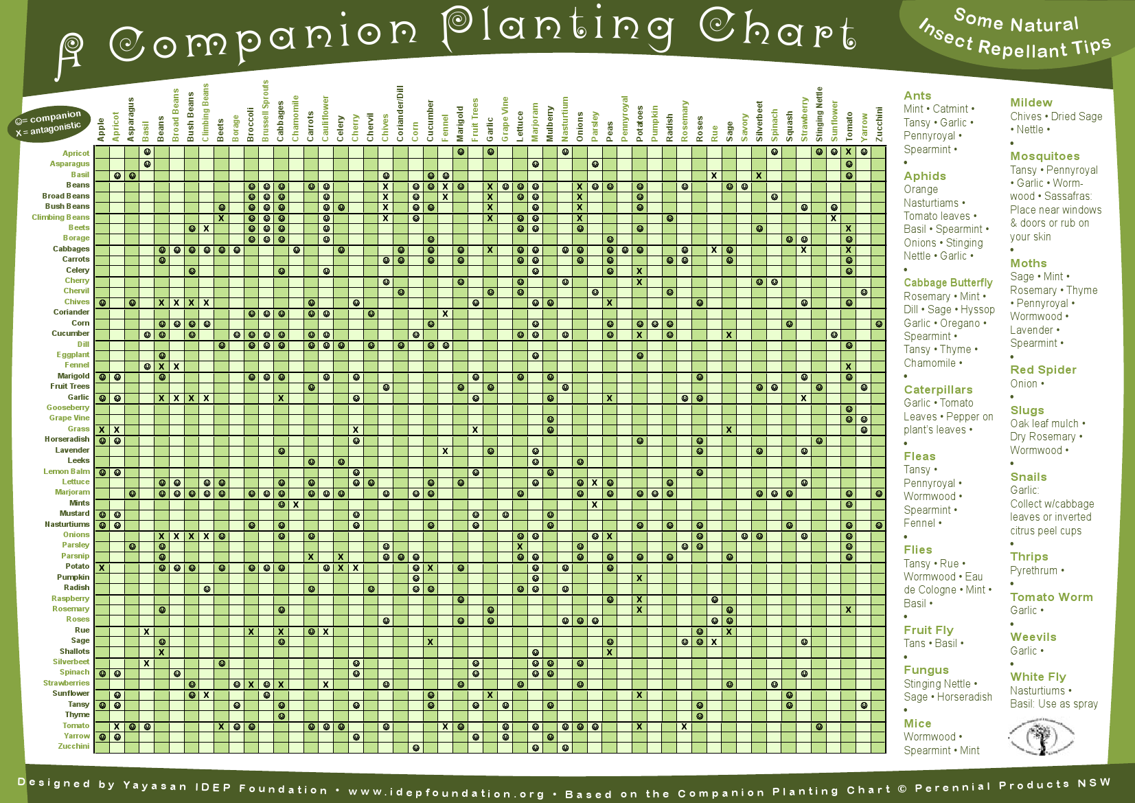 Companion planting chart gardening pinterest for Nursery charts